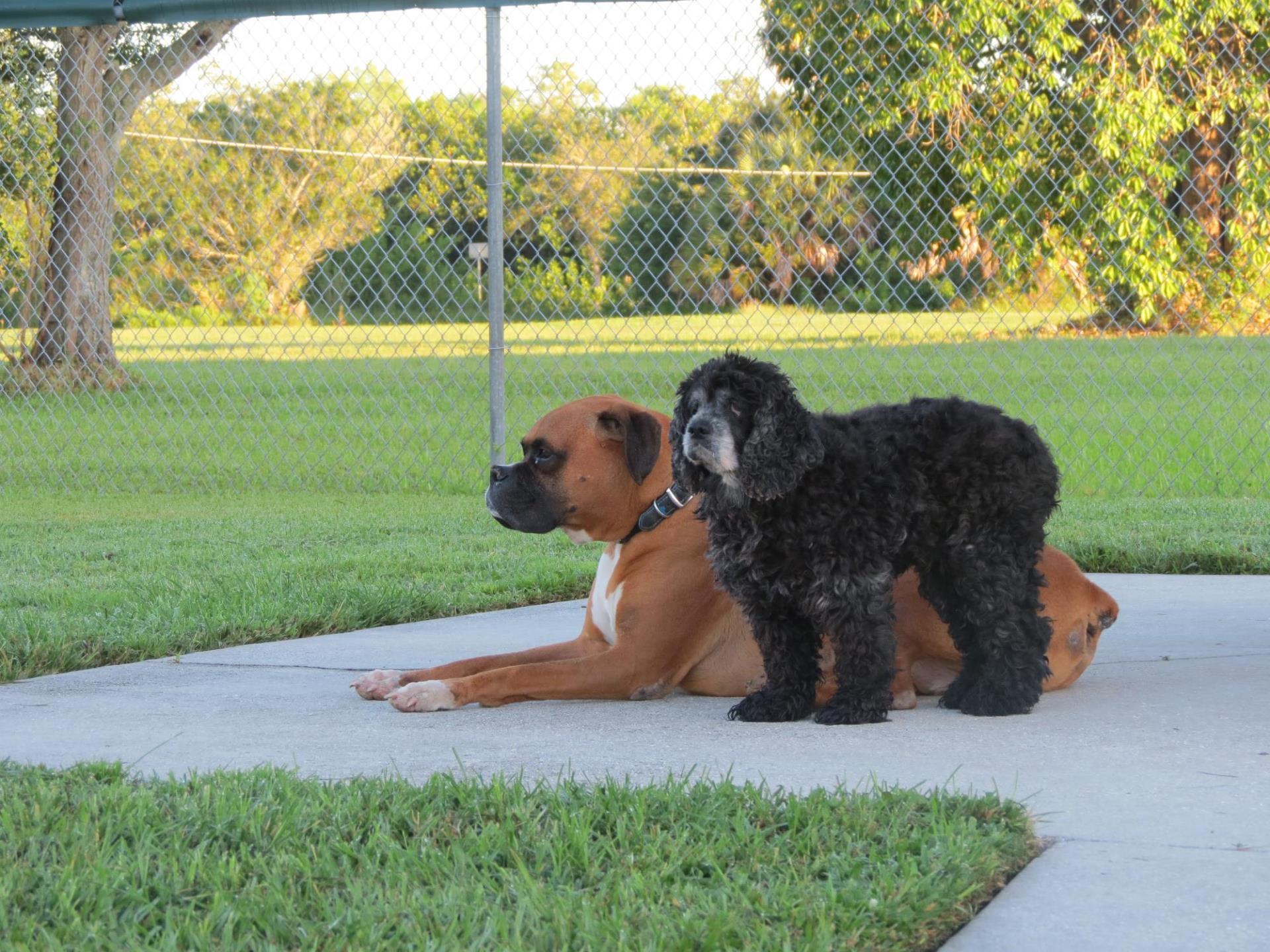Hounds on Henry | Gilchrist Park | City of Punta Gorda, FL