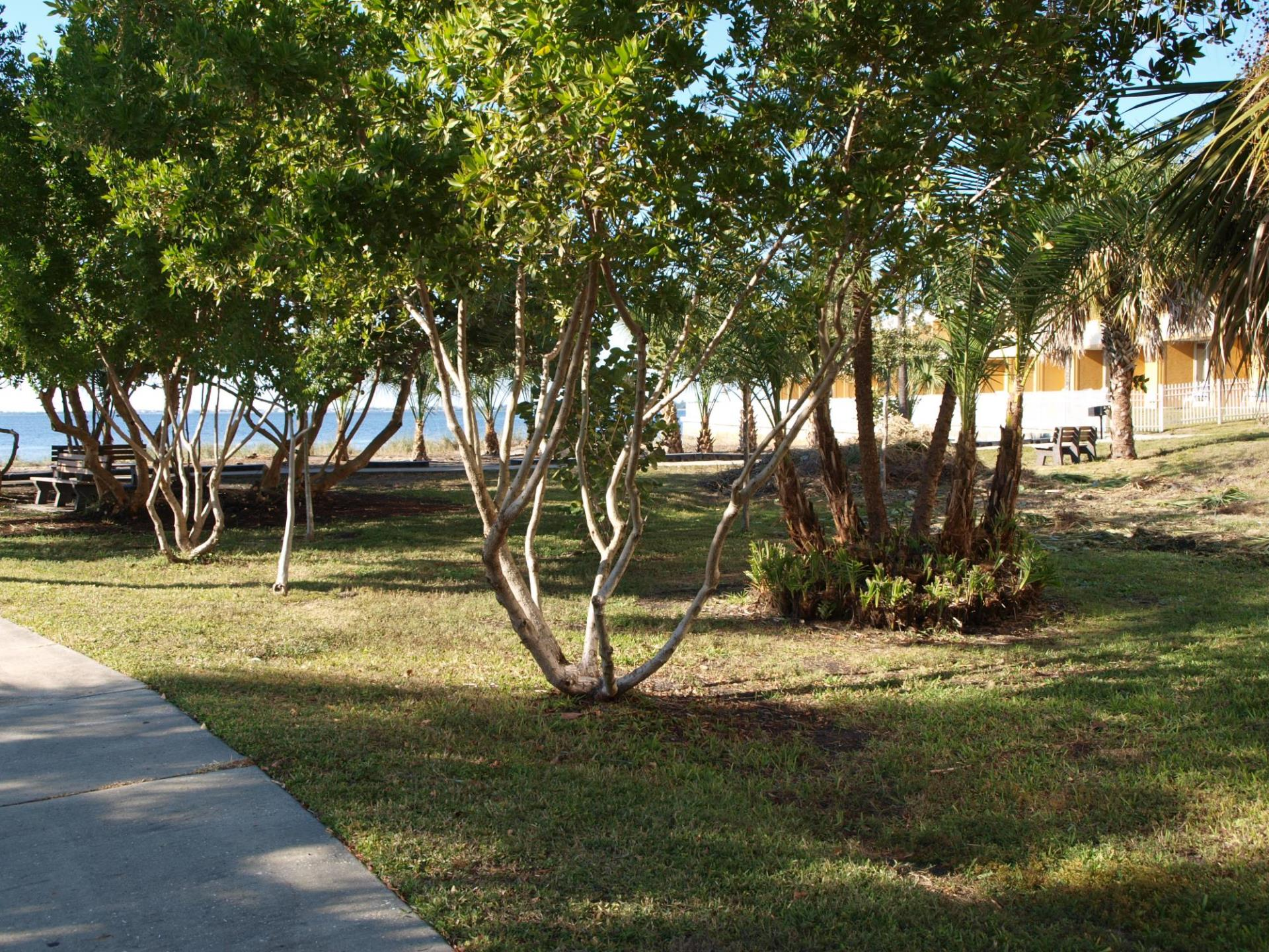along the harbor trees