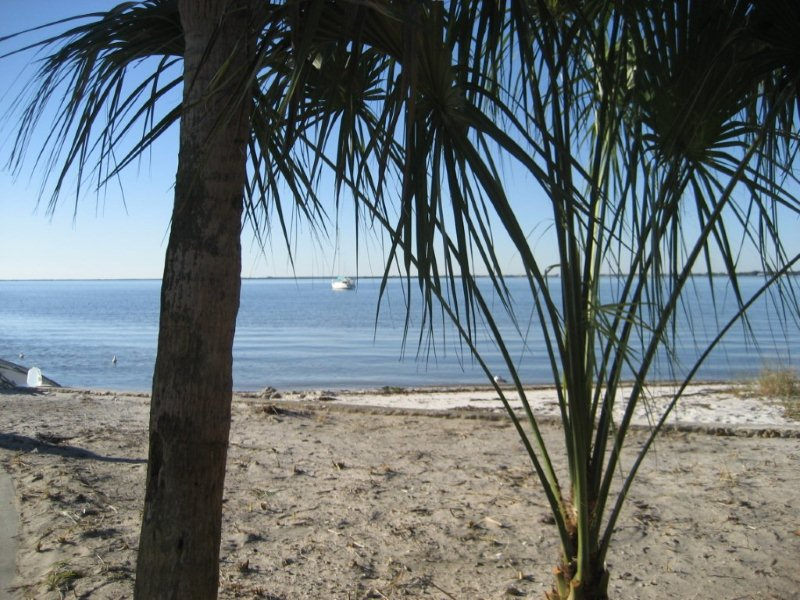 trees and sandy beach along water